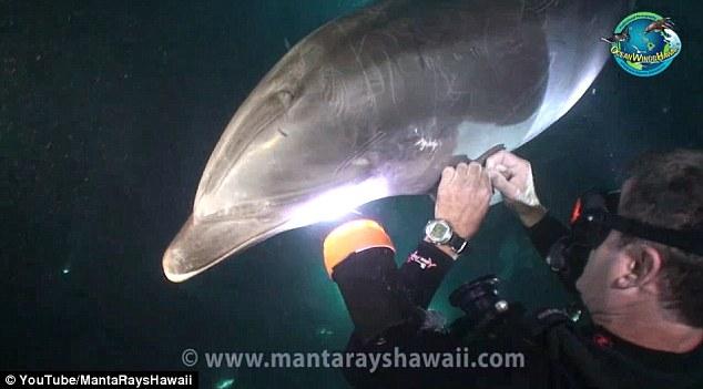 keller-laros-dolphin