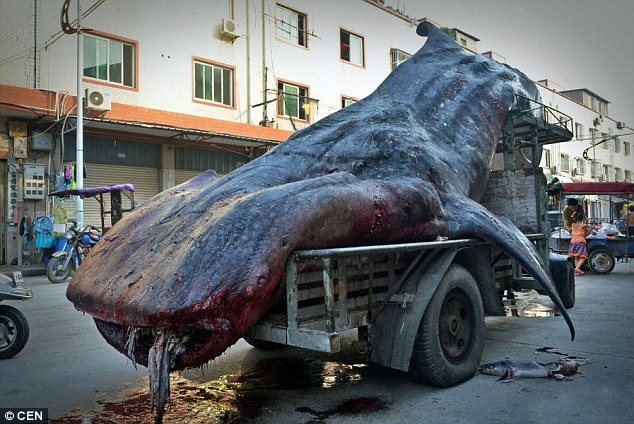 Chinese_fishermen_Cai_Ch