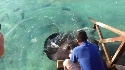 stingray-food-feeding-video